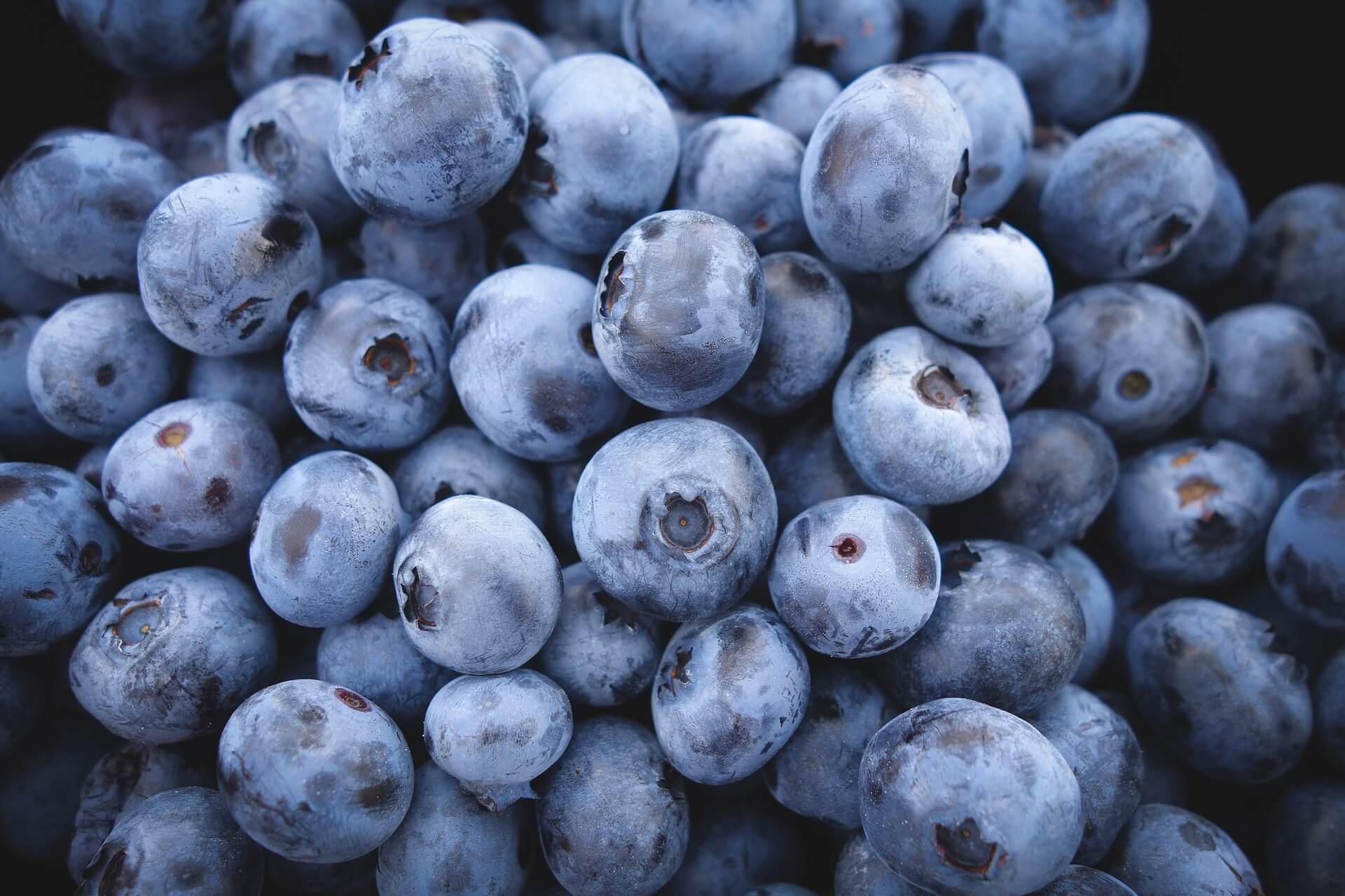blueberries-690072_1920